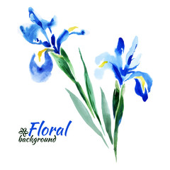 Beautiful watercolor paint blue irises. Vector illustration.