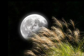 ススキと月