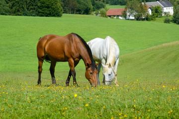 Pferdeidylle am Reiterhof