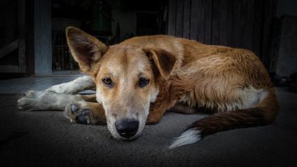 Dramatic  image of sad a dog