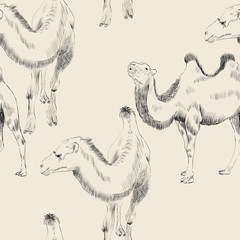 hand drawn camel