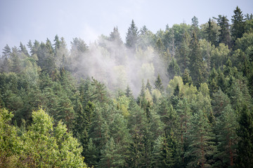 misty forest after the rain in summer