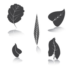 Herbarium of silhouette leaves. A vector illustration. 2