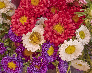 aster flowers bouquet closeup, natural background