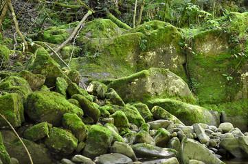 Green mossy stones