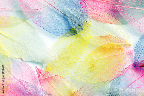 color leaves - 69254663