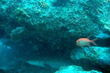 Seychellen Unterwasseraufnahmen
