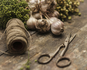 Coriander, garlic and flax on vintage desk with scissors