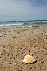 Coquillage et bord de mer