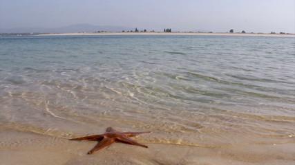 Starfish and Armona island, Ria Formosa View. Algarve