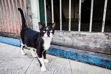 Curious stray cat in asia street