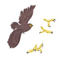 Halloween mystery design owl and talons vector