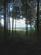 canvas print picture - Ausblick im Laubwald