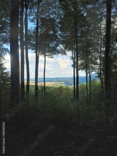 canvas print picture Ausblick im Laubwald