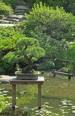 bonsai dans un jardin japonais