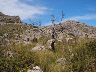 Mallorca - Wanderweg Torrent de Mortitx