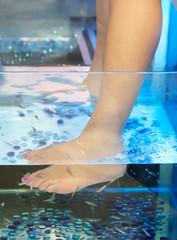 Doctor fish.Fish Spa pedicure Rufa Garra treatment.