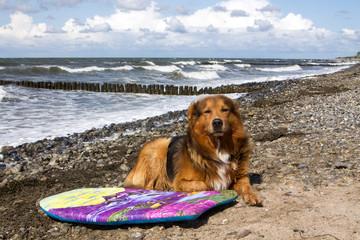 Hund am Strand mit Surfbrett