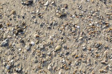 Texture di conchiglie e pietre