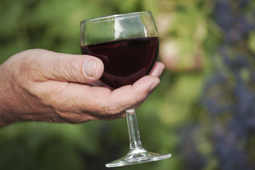 Men's hand holding glass of red wine in vineyard