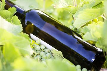 Wine bottle in the vineyard