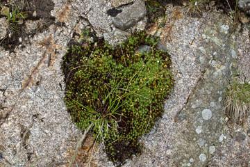 Moosteppich in Herzform