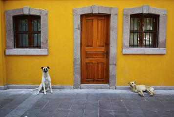 sokak köpeklerinin uyanması