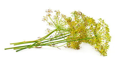 dill flower isolated