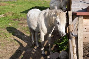 Pferde auf dem Bauernhof