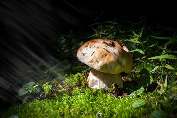 fungo porcino con raggi di luce