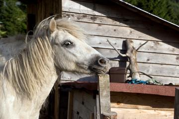 Pferd auf dem Bauernhof