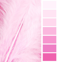 feather plumage pink color chart selection for interior