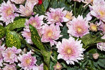 bouquet of pink flower