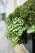 canvas print picture - Blumenkasten mit Pflanzen