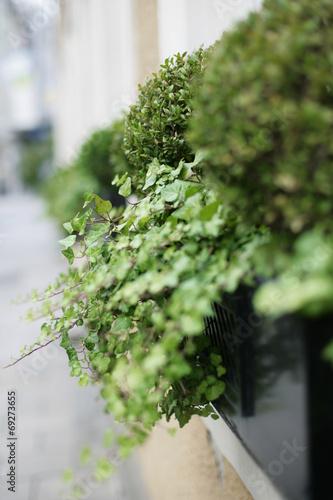 canvas print picture Blumenkasten mit Pflanzen