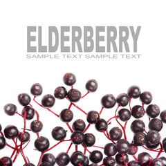 The Elderberry Sambuscus Nigra.
