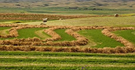 Farming Saskatchewan