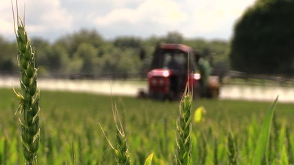 Wheat plants and tractor spray fertilize field with chemicals