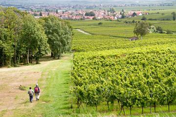 View from Villa Ludwigshöhe near Edenkoben, Rheinland-Pfalz, Ge