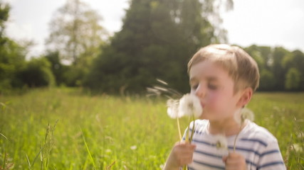 Little Boy Blowing Dandelions