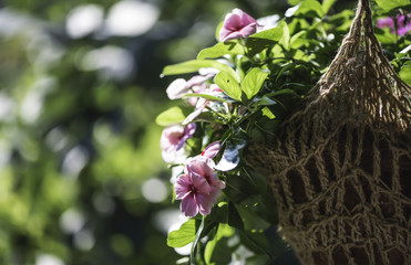 Flowers hanging pot