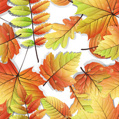 Colorful autumn seamless leaves isolated. EPS 10