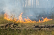 Fire barrier strip in the forest - 69279871