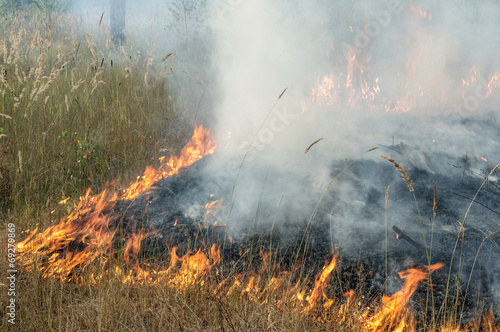Burning the grass on a summer day at the edge of the forest