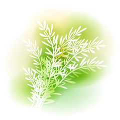 Illustration With Rosemary