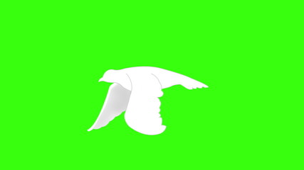 Flying white bird on green screen.Seamless and loop-able