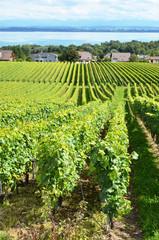 Vineyards in Colombier against lake Neuchatel, Switzerland