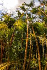 Végétation Ile de la Réunion