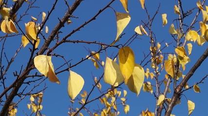 Autumn leaves sunny