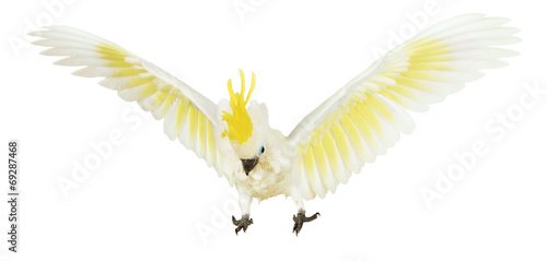 Foto op Canvas Papegaai Sulphur-crested Cockatoo on the white background